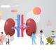 doctors team inspecting checking kidneys human internal organ examination healthcare medicine concept full length copy space horizontal vector illustration