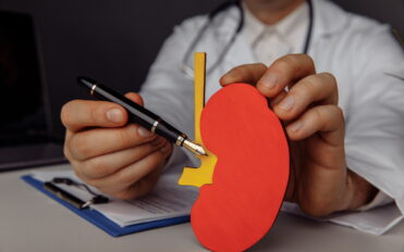 Doctor showing a wooden model of kidney close-up.